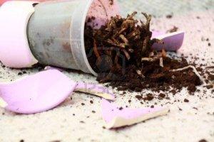 5895478-broken-flower-in-pot