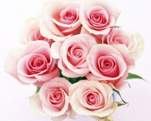 Fresh_Beautiful_Bouquet_Pink_Roses